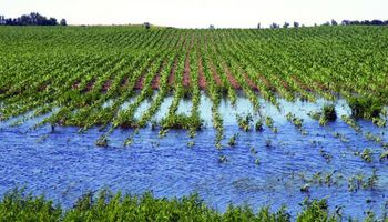 ¿La siembra directa es responsable de las inundaciones?
