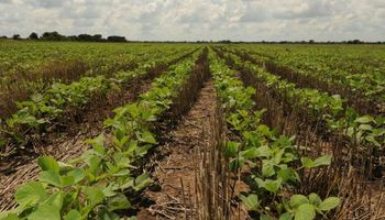 La siembra de granos caerá por cuarto año consecutivo