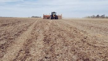 La siembra de maíz ya cubrió más de 400 mil hectáreas: cómo está la humedad en cada zona