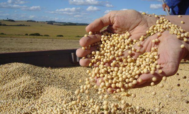 Agroconsult estimó un crecimiento del área sojera del 1,5%.