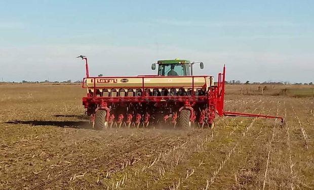 Trigo: la siembra alcanzó el 60 % de lo estimado en la zona núcleo y avanza entre falta de agua y excesos