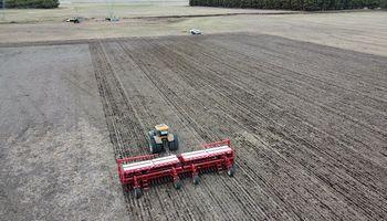 La siembra de trigo avanza a un ritmo récord: cómo impacta la ola polar sobre el cereal