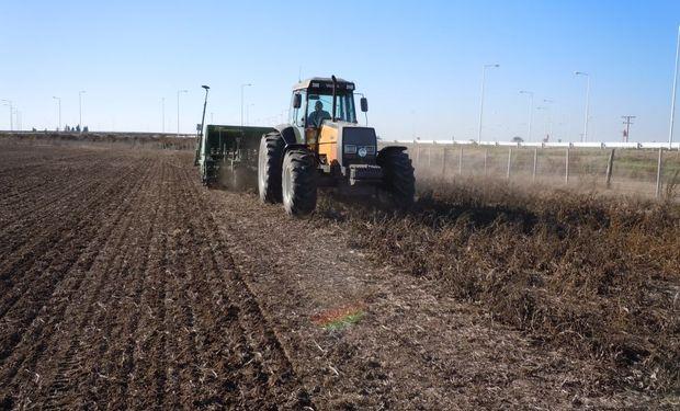 Se cerró la siembra de maíz con menos del 50% de la intención