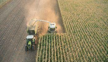 Cómo hacer silaje de maíz de alta calidad