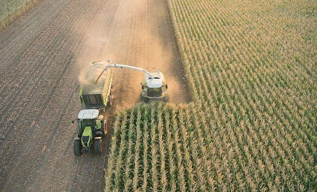 Un adelanto con algunas recomendaciones para aprovechar al máximo los aportes del maíz.