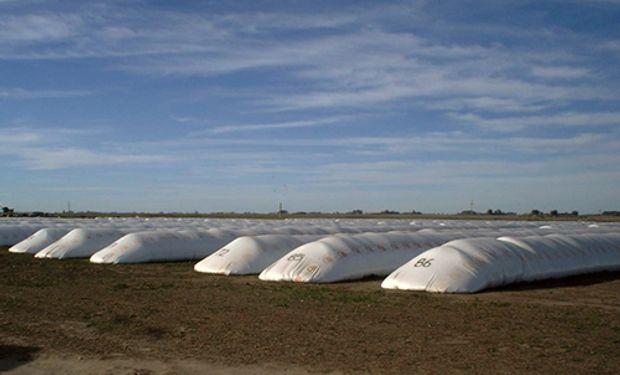 Los 3 factores que motivaron una demanda adicional de 30.000 silo bolsas