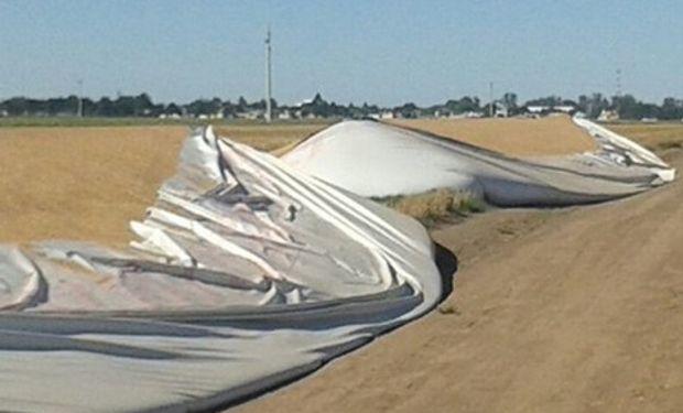 Uno de los silobolsas destruidos, con soja. Foto: Cartez