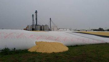 Nuevo ataque a silobolsas, esta vez con 600 toneladas de soja