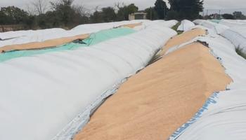 """""""Estamos consternados"""": destruyen silo bolsas de trigo y soja en la planta de acopio de una cooperativa"""