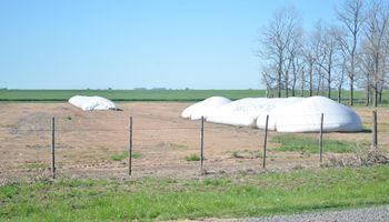 Productores vendieron menos soja, pero más trigo y maíz