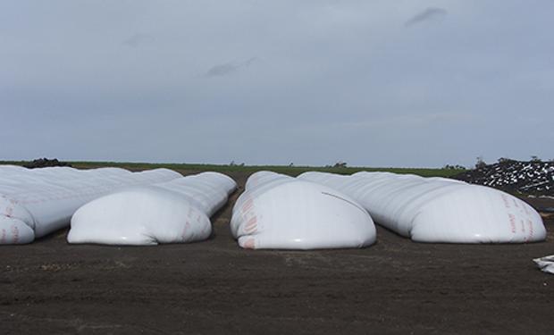 De acuerdo con un informe del INTA, la cosecha gruesa fue guardada, en gran medida, en bolsas plásticas.
