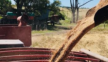 La recuperación del rubro agropecuario no logró compensar la caída en la actividad