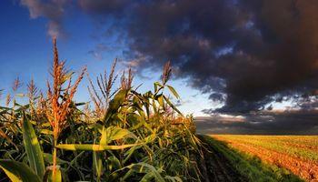 Se agrava la situación de la industria del etanol de maíz