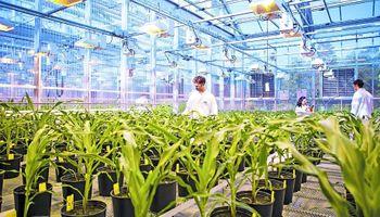 BASF le comprará a Bayer nuevos negocios de semillas y protección de cultivos