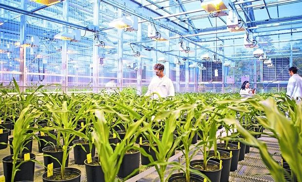 En la localidad de Limburgerhof, Alemania, Basf tiene su centro mundial de investigación de agro, que ahora sumaría nuevos negocios.