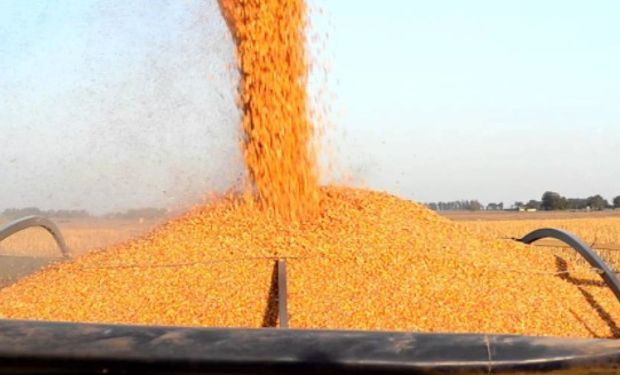 Además de afectar a los productores agropecuarios, estos recortes también impactarán en otras actividades relacionadas con esta cadena de valor.