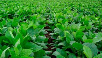 ¿Sube la soja en 2021?: la FED y la reflación de activos