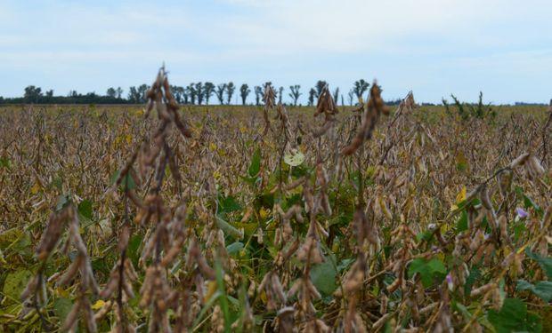 USDA: qué expectativa tiene el mercado de granos para el informe que se presenta hoy