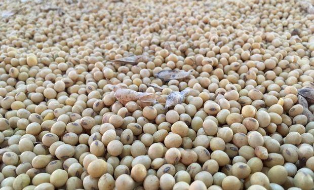 La soja en Rosario acumula una suba de U$S 74,4 contra el año pasado