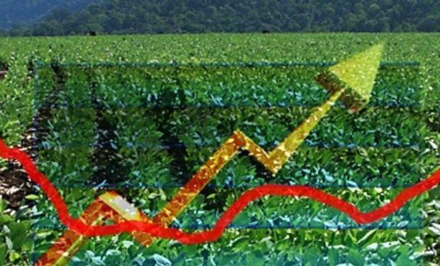 Subas en el disponible de soja y maíz