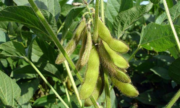 Actualmente la soja tributa un derecho de exportación cercano al 27% bajo el esquema actual, fijado en septiembre de 2018.
