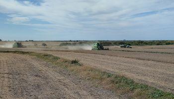 Destacan la oportunidad que tiene Argentina de producir 200 millones de toneladas de granos