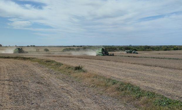 Se estima que las mejoras en el sistema logístico tienen mayor impacto sobre el cultivo de maíz, el cual gana participación con respecto a la soja.