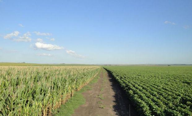 El rendimiento del maíz creció el doble que el de la soja en zona núcleo
