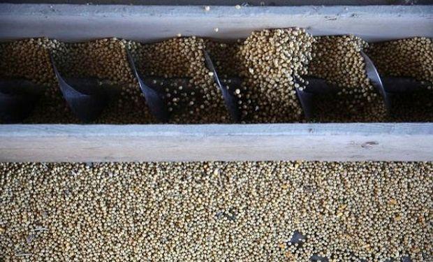 Cuánta soja queda sin vender y qué precio se llegó a pagar en Rosario