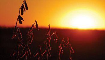El mercado de soja, trigo y maíz se prepara para un informe que históricamente impactó sobre los precios