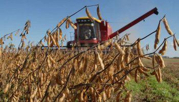 Soja: Se cosechó el 58,5% en Mato Grosso