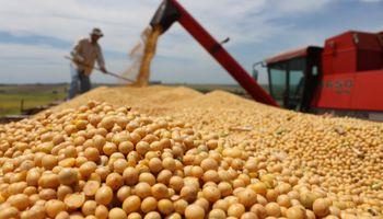 Cae el procesamiento de soja en Paraguay