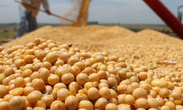 El productor destacó que mediante una empresa de Sampacho obtuvo una variedad de soja para multiplicar.