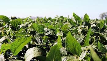 """""""La Fórmula Uno del control"""": Corteva continúa sumando soluciones a su portafolio de herbicidas"""