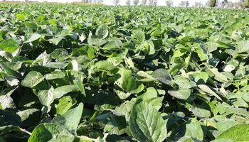 Zona núcleo: cae la superficie de soja y la brecha de rendimiento se agranda