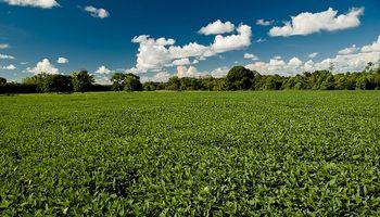 Cosecha de soja: más de 50 millones de t.