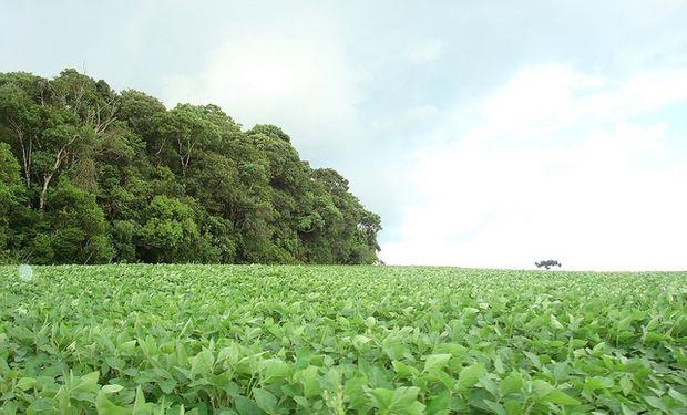 Cosecha de soja de Brasil alcanzaría 86 millones de toneladas en 2013/14