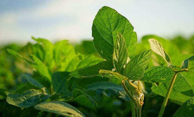 Brasil prevé cosecha récord de soja