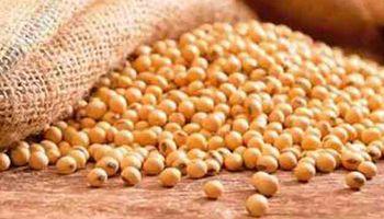 Suben retenciones para balanceados a base de soja