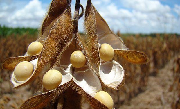 Los futuros de soja cerraron la jornada con pérdidas en el Mercado de Chicago
