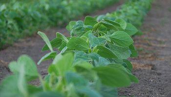 Más de 6.000 millones de dólares aportó Santa Fe por retenciones agroindustriales