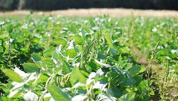 La siembra de soja se elevaría a niveles récord en EE.UU.