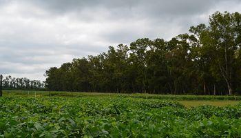 Con tres ejes principales, plantean un manejo integrado de fitosanitarios