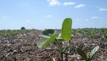 Las lluvias reducen la siembra de soja a 17,7 millones de hectáreas