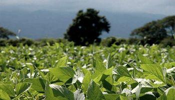 Santa Fe: la soja de segunda atraviesa el peor de los escenarios para el cierre del ciclo