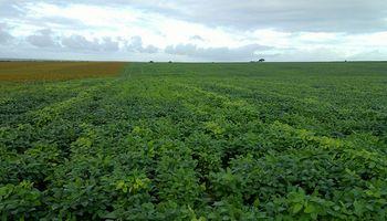 Brasil: recortan cosecha de soja a 87 MM de tn