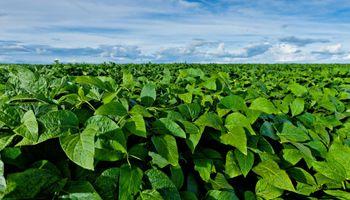 Lanzan nueva tecnología para controlar enfermedades en soja