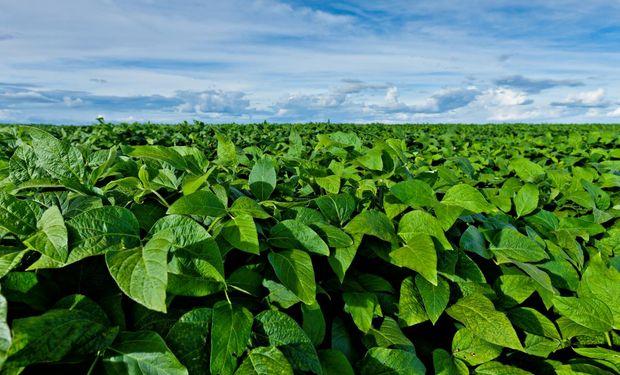 La soja ocupa 12.734.371,7 hectáreas en 124.827 parcelas.