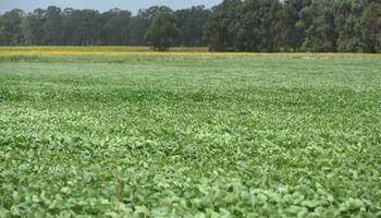 La nutrición biológica se presenta como una aliada para mejorar el potencial productivo de la soja