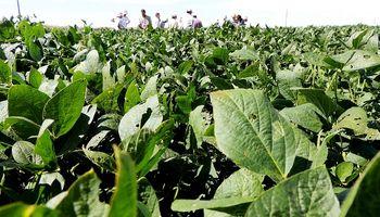 Tras las lluvias, se espera que la soja supere los 40 quintales promedio en zona núcleo